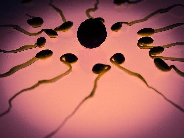 Photo of Ovulazione: quali sono i sintomi e come cercare una gravidanza