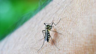 Photo of Febbre dengue: sconfiggerla grazie a un batterio